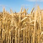 אדמה חקלאית